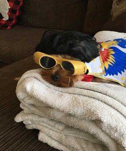 Dog Walking, Pet Sitting, St Pete, Dog Walker, cat Sitter, seminole, treasure island, st pete beach, feathersound, pinellas Park