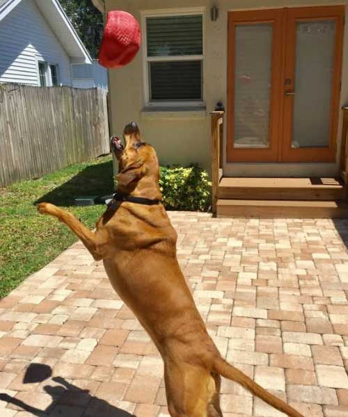 Lilly playing catch