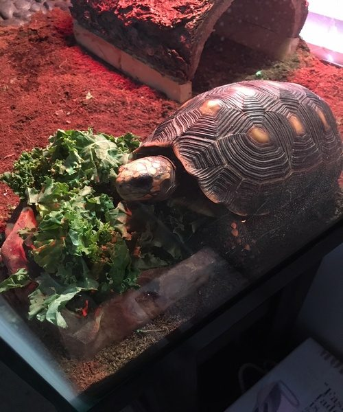Bubba loves his kale