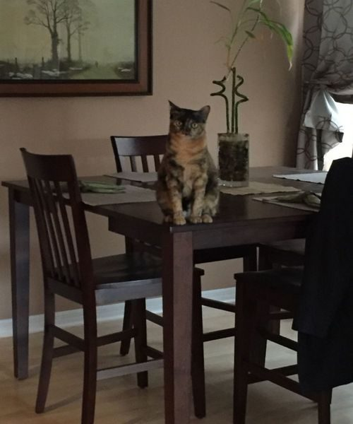 Sophie waiting for dinner to be served