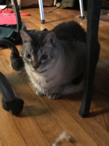pet sitter near me