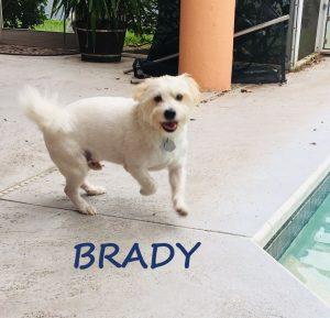 dog walking pet sitting, st pete, seminole, treasure island, tierra verde, feathersound, pinellas park, dog walk, cat sit