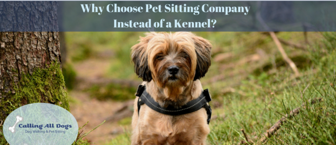 Why Choose a Pet Sitting Company Instead of a Kennel?
