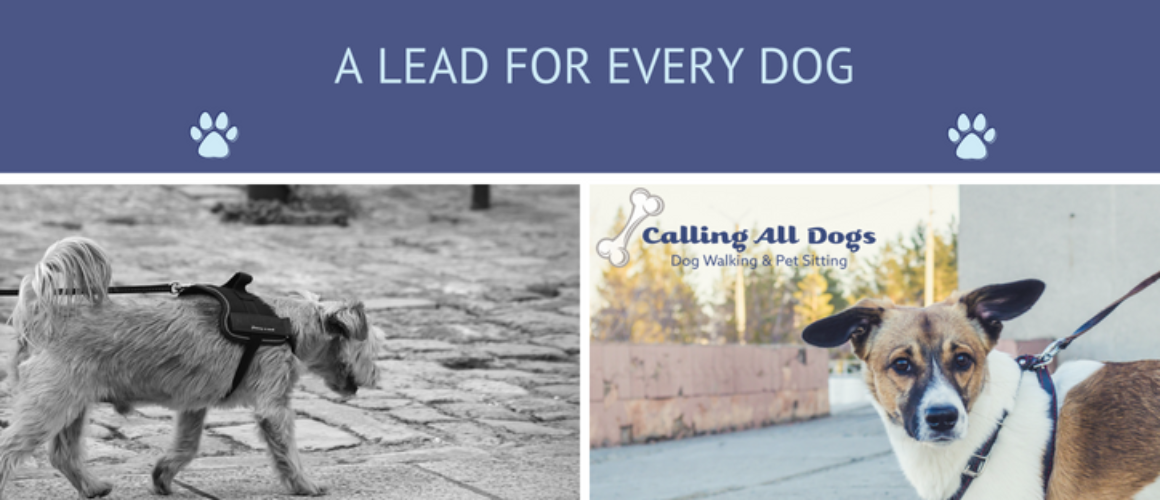 A Lead for Every Dog