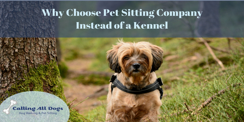 Why a Dog Walking Company Instead of a Kennel?