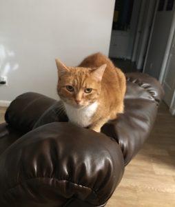 cat sitting near me