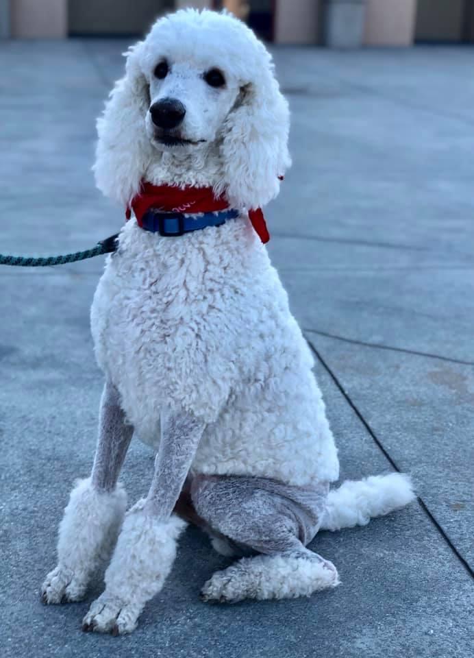 dog walker largo