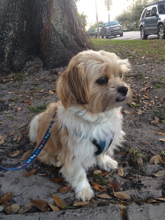 dog walking palm harbor