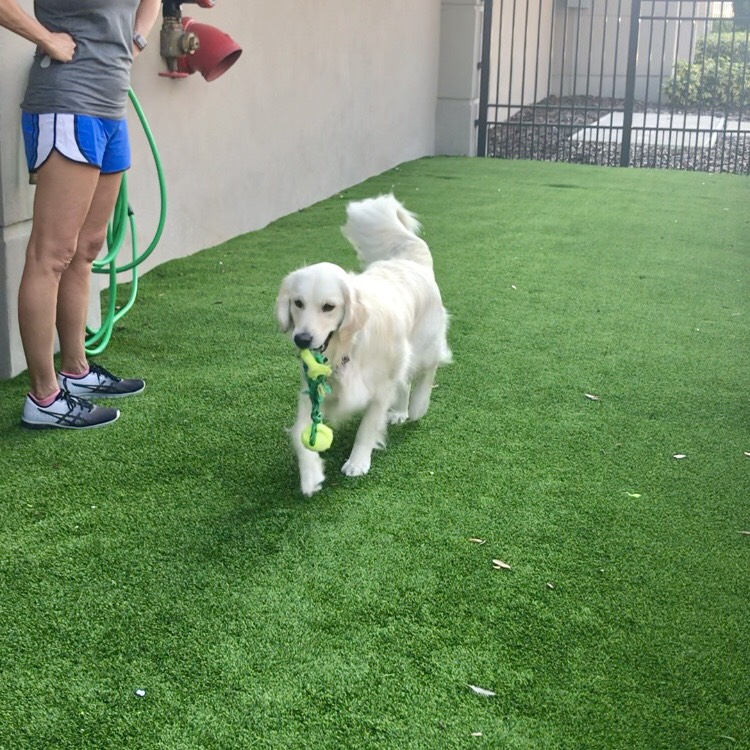 Dog walkers st pete