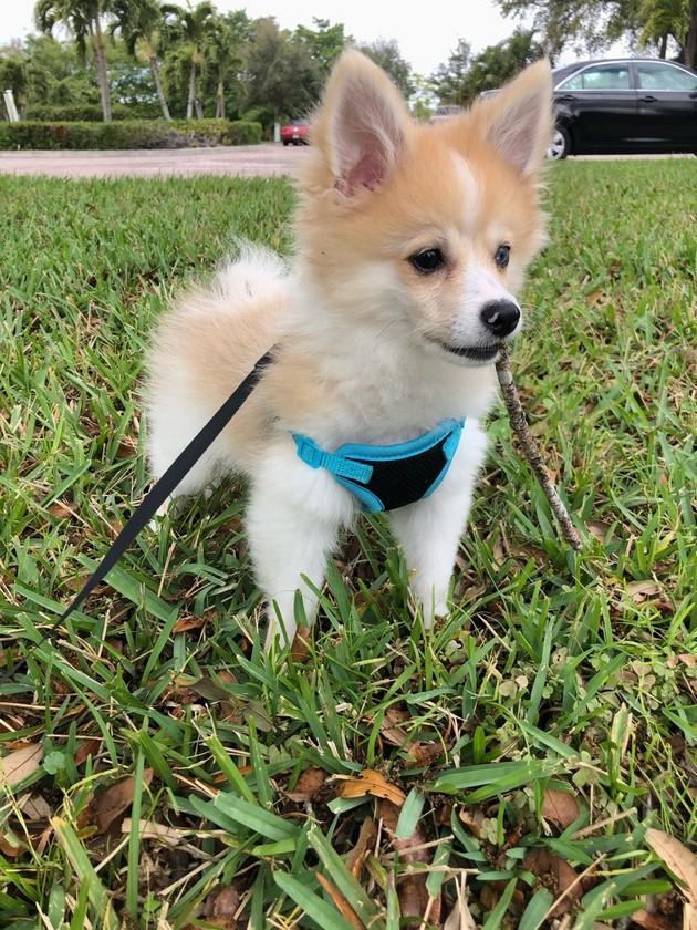 dog walking seminole