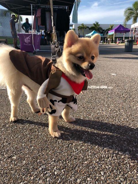 dog walker madeira