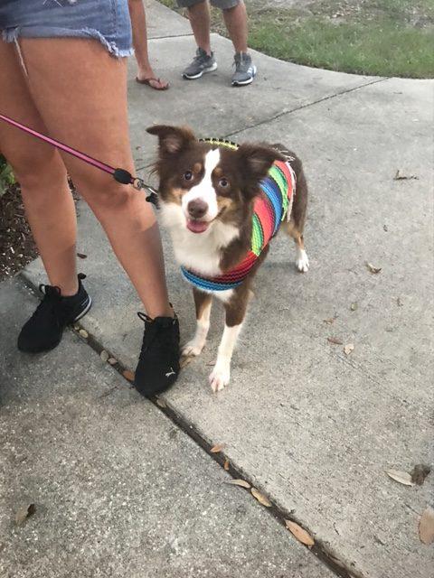 dog walking largo