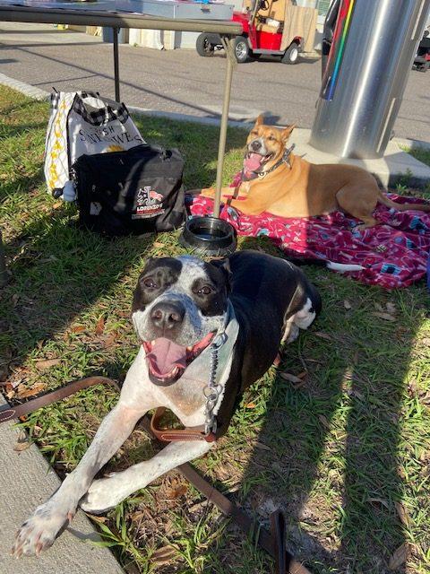 pet sitter Tampa