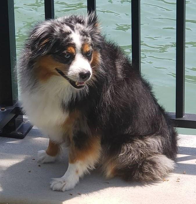 dog walker clearwater