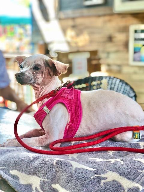 dog walker St Pete