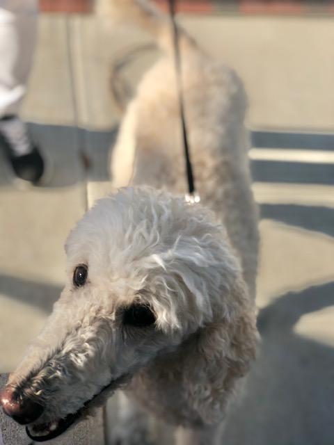 dog walker near me