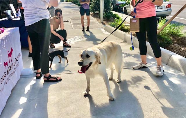 dog walker Seminole