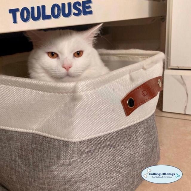 If I fits... I sits 🐈😍 #callingalldogsandCATS