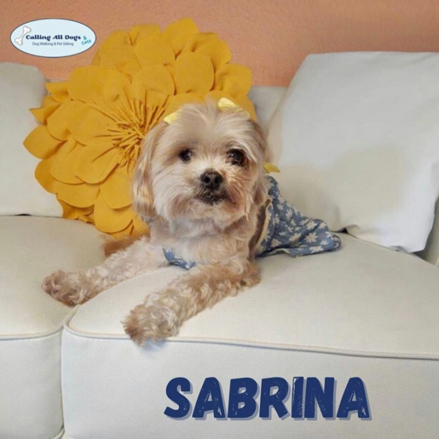 Feeling cute.. might delete later 😉💅#SabrinaThePrincess