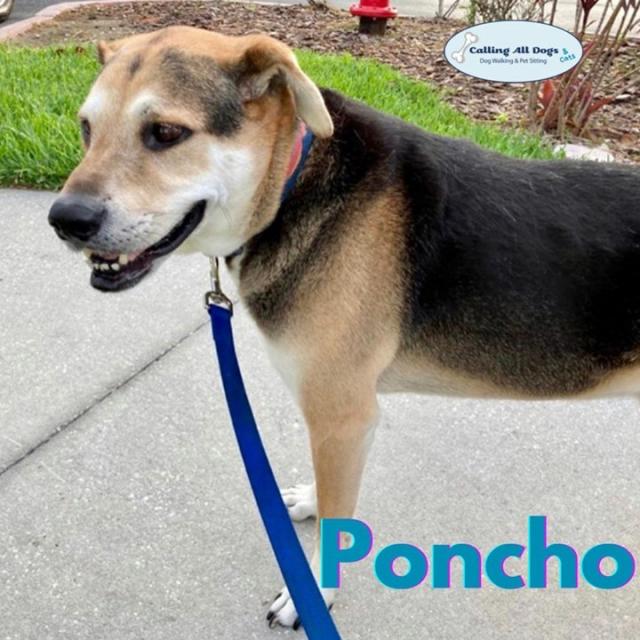 Henlo furiends ☺️ Hope everyone is enjoying their Saturday !! ☀️ We sure are 🦮 #DogWalkingAndPetSitting