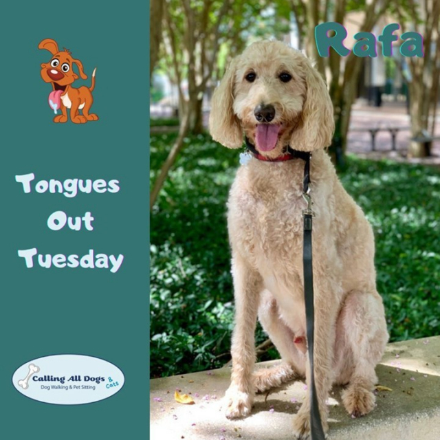 Just the happiest of Tuesday's , #TongueOut !😍🐶