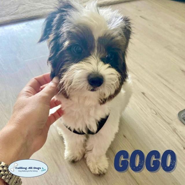 "On Friday's we ""GoGo"" on walks 😉🐶 #WagginWalkinAndWoofin"