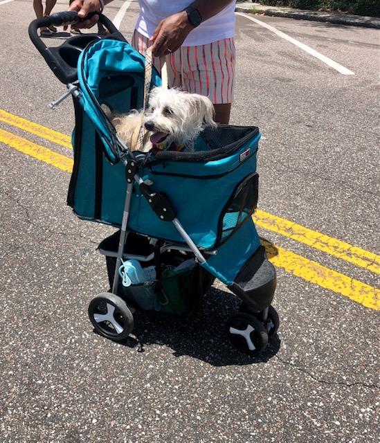 dog walker dtsp