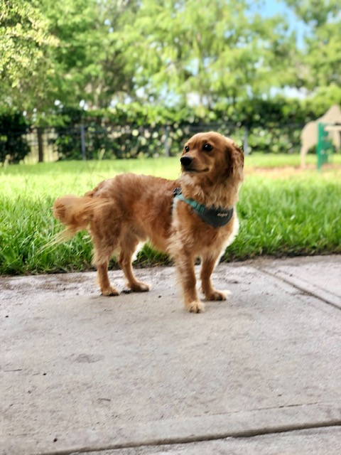 dog walker Pinellas Park