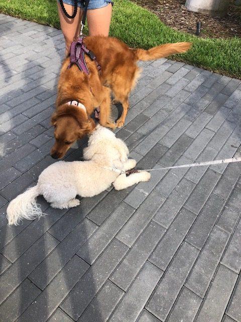 Dog Walker South Tampa