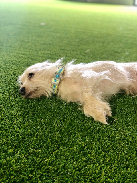 dog walker Feather Sound