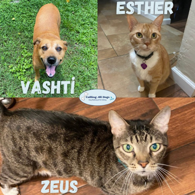 Fur-iends thru thick and thin 😻😸 #callingalldogsandcats