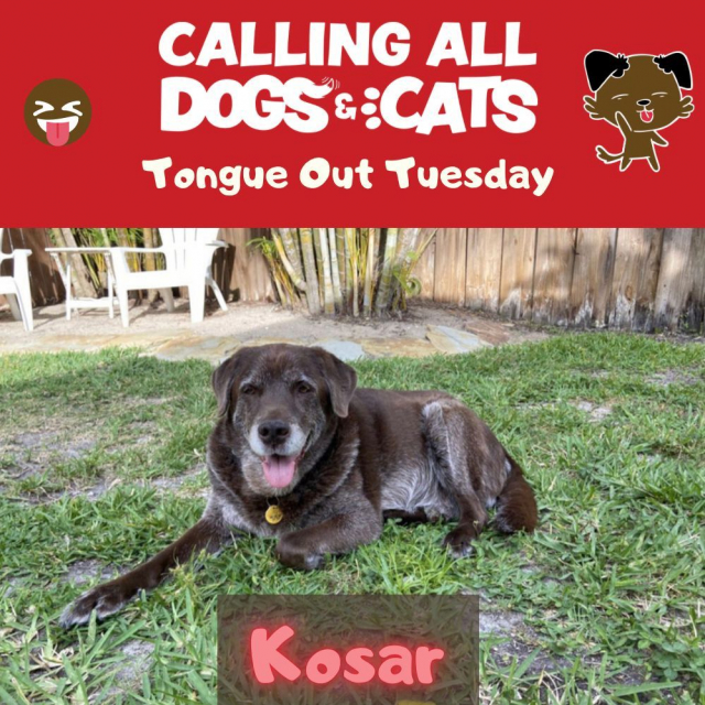 It's another tongue out Tuesday! Hopes you have a happy one 😝 #kisskiss
